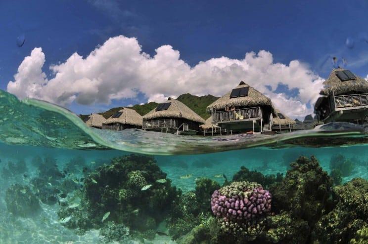 Tahiti's many diverse kinds of fish